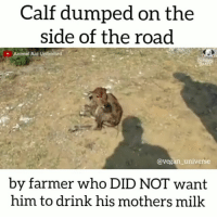 Animals, Drinking, and Memes: Calf dumped on the  side of the road  Animal Aid Unlimited  @vegan universe  by farmer who DID NOT want  him to drink his mothers milk GO VEGAN 👊 🌱🌱🌱 🌱🌱 🌱 . SAVE ANIMALS↔FOLLOW VEGANS @ugly_by_nature @_respect_for_animals_ @humansforbeings _______________________________ vegan veganuniverse dairyfree govegan meatfreeathlete nodairy veganmuscle crueltyfree vegangirl rawvegan veganlife vegansofinstagram animalrights vegansofig animalwelfare plantbased vegangirl rawtill4 rawtillwhenever milk vegana veganmom leche veganism vegansofig plantbasedathlete veganbodybuilding animalcruelty teenvegan veganfood