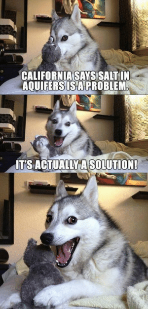 Bad, Science, and Salt: CALIFORNIASAYS SALT IN  AQUIFERS ISAPROBLEM  IT'S ACTUALLY A SOLUTION Bad science pun dog