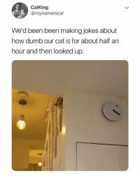 always watching 🐱: CalKing  @mynameiscal  We'd been been making jokes about  how dumb our cat is for about half an  hour and then looked up: always watching 🐱