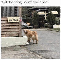 """Dogs, Memes, and Shit: """"Call the cops, I don't give a shit""""  T NO DOGS 😂"""