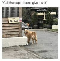 """Hello 911? (Btw the link in my bio is a gallery of the dankest memes of the week as featured on @breakcom CLICK THAT SHIT): """"Call the cops, l don't give a shit""""  SORRY  NO DOGS Hello 911? (Btw the link in my bio is a gallery of the dankest memes of the week as featured on @breakcom CLICK THAT SHIT)"""