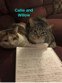 """Chapter 2  November 1, 2016 Monday Cinomon's Spice Rack Resort Conference Room   Willow was sitting at one of the back tables waiting for her friends to arrive.  She looked up when Ella and Showlow entered the room.  She waved them both over to her.  """"Any idea who is going to be coming to the planning session??""""  Willow inquired of her sister.  Ella looked off into space for a moment before replying.  """"Well the usual gang will be here.  That's our sisters and their boyfriend's families.  And umm Friendly, Angel Miss Nike, Mooch, Thinman and his family, Angel Mahkeetah and his family.  It was a very popular idea with all of our friends.""""  Willow looked over to Showlow.  """"Do you think Pea will be willing to bend a few rules?  Since you both have to uphold the law, I thought I had better ask.""""  """"Yes, Peanut will be quite happy to bend or break a few rules""""  Showlow answered with a laugh.  """"I don't think we will have to worry about breaking any rules.  Pook's siblings want to have fun at their big brother's expense.""""  Willow and Ella both laughed at this.  They knew that Big Pook had a habit of pranking his siblings.  They were probably going to go all out on this prank.  """"Wonder if Police Chief Brutus will want to be included?  Then there's no way any of us can get into trouble.  He's part owner of the Chocolate Factory and store"""" said Ella while giggling.  Willow looked back at her list of pranksters.  She knew Sneezr would be up for anything that pranked Big Pook.  She was going to ask him to actually lead the main part of the prank.  She hoped that she could get Friendly and Wolfgang to carry out the diversion.  With Friendly winning the American Cat's Got Talent last year, she was the perfect kitty for the job.  It would need her stage crew and director.  Willow put a few more checks on her list.  Ella, who had been reading over Willow's shoulder, said """"What do you think we should steal from Pook?""""  """"I already have that planned.  Friendly told me about some special"""