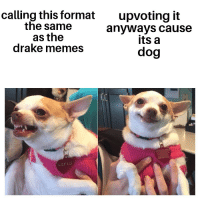 Drake Memes: calling this format  the same  as the  drake memes  upvoting it  anyways cause  its a  dog  LILY LU