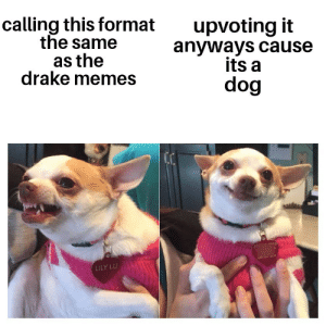 Im actually not sure which format came first by lucifertheecat MORE MEMES: calling this format  the same  as the  drake memes  upvoting it  anyways cause  its a  dog  LILY LU Im actually not sure which format came first by lucifertheecat MORE MEMES