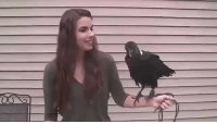 "Africa, Family, and Food: callmenewbie:  justalittlemouseinthedoorway:  psychiatriccircus:   sixpenceee: Turn on the sound and watch this raven mimic a human voice. This is Mischief the white-necked raven. These ravens are found throughout eastern and southern Africa, and are common near human habitation.  Like all members of the Corvidae family, ravens are extremely intelligent. They use tools to get food if necessary, and can even mimic human speech! (Source)  Okay but that's not some Gilbert Gottfried 'RAAAK POLLY WANNA CRACKER' this raven actually sounds like a person what the fuck   Imagine walking into a forest with a bunch of ravens and they start saying some scary messed up stuff ""you're gonna die"" and ""no one can hear you"". Then it turns out there was a gruesome murder and the Ravens heard it all.   nevermore."