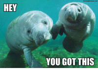 <p>The Calming Manatee has spoken</p>: Calming Manatee.com  HEY  YOU GOT THIS <p>The Calming Manatee has spoken</p>