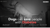 Bloods, Memes, and Diabetes: CAMBRIDGE  IN THE  Dogs can save people  with Diabetes  Bushnell  2014/11/27 02:43:53 Dogs can sniff out low blood sugar in diabetics and save lives