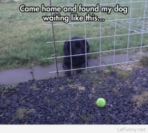 Funny, Home, and Image: Came home and found myY dog  waitina like this  LeFunny.net Not a very smart dog – funny image