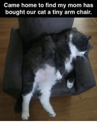 Caturday, Funny, and Memes: Came home to find my mom has  bought our cat a tiny arm chair. 20 Funny Animal Memes & Tweets That'll Surely Improve Your Mood #CatMemes #Caturday #FunnyCats