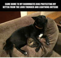 For more cute pics LIKE us at The Purrfect Feline Page: CAME HOME TO MY ROOMMATES DOG PROTECTING MY  KITTEN FROM THE LOUD THUNDER AND LIGHTNING OUTSIDE For more cute pics LIKE us at The Purrfect Feline Page