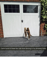 """Sharing 1 Million Cats on Instagram. Find us """"1MCats"""": Came home to these two cats slow dancing in my driveway today Sharing 1 Million Cats on Instagram. Find us """"1MCats"""""""