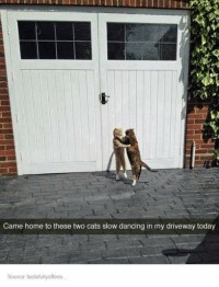 ~Kingslayer Your Tumblr Dealer  Checkout : We Post GIFs: Came home to these two cats slow dancing in my driveway today  Source tastefullyoffens... ~Kingslayer Your Tumblr Dealer  Checkout : We Post GIFs