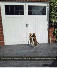 Slow Dance: Came home to these two cats slow dancing in my driveway today