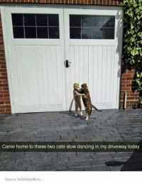 Slow Dance: Came home to these two cats slow dancing in my driveway today  Source tastefullyoffens