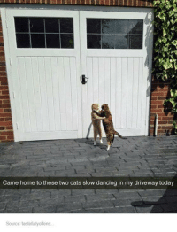 Slow Dance: Came home to these two cats slow dancing in my driveway today  Source tastefullyoffens.