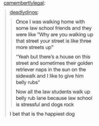 "Dogs, Friends, and I Bet: camembertlylegal:  deadlydinos  Once I was walking home with  some law school friends and they  were like Why are you walking up  that street your street is like three  more streets up""  ""Yeah but there's a house on this  street and sometimes their golden  retriever naps in the sun on the  sidewalk and I like to give him  belly rubs""  Now all the law students walk up  belly rub lane because law school  is stressful and dogs rock  I bet that is the happiest dog happy dog https://t.co/OmZqwTBJLm"