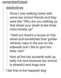 "Dogs, Friends, and I Bet: camembertlylegal:  deadlydinos  Once I was walking home with  some law school friends and they  were like Why are you walking up  that street your street is like three  more streets up""  ""Yeah but there's a house on this  street and sometimes their golden  retriever naps in the sun on the  sidewalk and I like to give him  belly rubs""  Now all the law students walk up  belly rub lane because law school  is stressful and dogs rock  I bet that is the happiest dog <p>Happiest Doggo! via /r/wholesomememes <a href=""http://ift.tt/2sKI68A"">http://ift.tt/2sKI68A</a></p>"