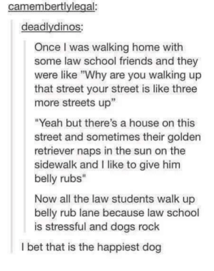 "Happiest Doggo: camembertlylegal:  deadlydinos  Once I was walking home with  some law school friends and they  were like Why are you walking up  that street your street is like three  more streets up""  ""Yeah but there's a house on this  street and sometimes their golden  retriever naps in the sun on the  sidewalk and I like to give him  belly rubs""  Now all the law students walk up  belly rub lane because law school  is stressful and dogs rock  I bet that is the happiest dog Happiest Doggo"