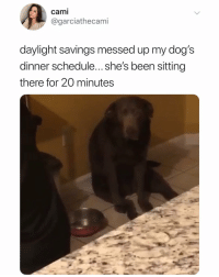 oh no: cami  @garciathecami  daylight savings messed up my dog's  dinner schedule... she's been sitting  there for 20 minutes oh no
