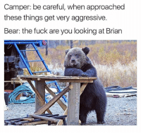My parents always told me you're either going to be broke or stupid. Jokes on you mom & dad cause I'm both. (Follow @thefunnyintrovert if you don't already): Camper: be careful, when approached  these things get very aggressive.  Bear: the fuck are you looking at Brian My parents always told me you're either going to be broke or stupid. Jokes on you mom & dad cause I'm both. (Follow @thefunnyintrovert if you don't already)