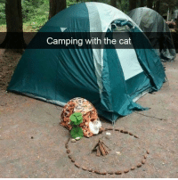 camping: Camping with the cat