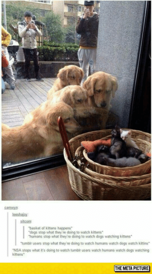 Dogs, Tumblr, and Kittens: camwyn  leeshajoy  sitcom  basket of kittens happens  dogs stop what they're doing to watch kittens  humans stop what they're doing to watch dogs watching kittens  tumbir users stop what they're doing to watch humans watch dogs watch kittins  NSA stops what it's doing to watch tumblr users watch humans watch dogs watching  kittens  THE META PICTURE Kittens look at each other* we will have the world in our hands with this power ^^