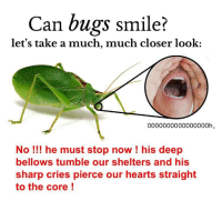 "Reddit, Hearts, and Smile: Can bugs smile?  let's take a much, much closer look:  0000000000000000h  No! he must stop now ! his deep  bellows tumble our shelters and his  sharp cries pierce our hearts straight  to the core! <p>[<a href=""https://www.reddit.com/r/surrealmemes/comments/7cr255/b%C5%8D%C5%8Dm_crumch_tumble_protect/"">Src</a>]</p>"