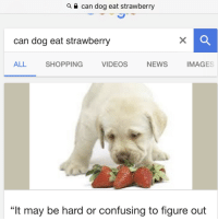 """News, Shopping, and Videos: can dog eat strawberry  can dog eat strawberry  ALL  SHOPPING  VIDEOS  NEWS  IMAGES  """"It may be hard or confusing to figure out"""