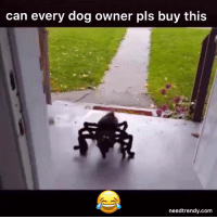 I NEED this IMMEDIATELY!!  😂💀🐶😱  Get yours HERE  ➡️ http://needtrendy.com/spiderdog: can every dog owner pls buy this  needtrendy.com I NEED this IMMEDIATELY!!  😂💀🐶😱  Get yours HERE  ➡️ http://needtrendy.com/spiderdog