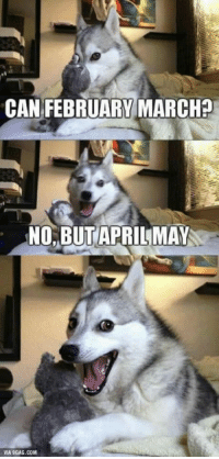 9gag, Love, and Memes: CAN FEBRUARY MARCH?  NO,BUTAPRILMAY  VIA 9GAG.COM So punny. I love memes with this dog!!!!!!! This dog is my spirit animal
