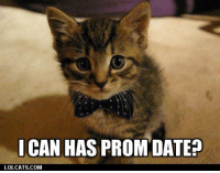 Grumpy Cat, Dates, and  Prom: CAN HAS PROM DATE?  LOLCATS COM