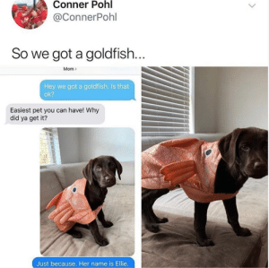 Can I bring my goldfish to work?via @conner.pohl39: Can I bring my goldfish to work?via @conner.pohl39