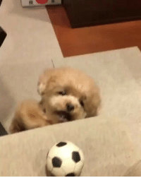 Memes, 🤖, and Sora: Can I get my soccer ball? ⚽️ Video by: @sora_atu