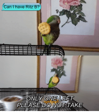 Birds, Only One, and  Ritz: Can I have Ritz B?  ONLY ONE LEFT  PLEASE DO NOT TAKE