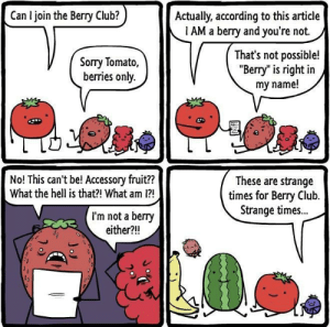 "Club, Dank, and Memes: Can I join the Berry Club?  Actually, according to this article  1 AM a berry and you're not.  Sorry Tomato,  berries only.  That's not possible!  ""Berry"" is right in  my name!  No! This can't be! Accessory fruit??  What the hell is that?! What am 1?  These are strange  times for Bery Club.  Strange times..  I'm not a berry  either?!! Berry time by PlanetCEC MORE MEMES"