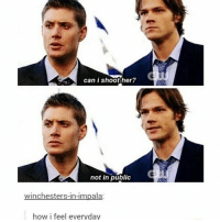 shoot someone Winchester style: can i shoot her?  not in public  winchesters-in-impala  how i feel everyday shoot someone Winchester style