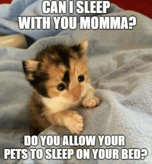 Memes, Pets, and Sleep: CAN I SLEEP  WITH YOU MOMMA?  DO YOU ALLOW YOUR  PETS TO SLEEP ON YOUR BED? Yes little cat, you can.