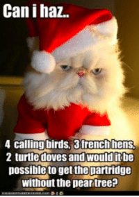 What's on your cat's gift list?: Can ihaz  4 calling birds, 3 french hens  2 turtle doves and would itbe  possible to getthe partridge  without the pear treeP What's on your cat's gift list?