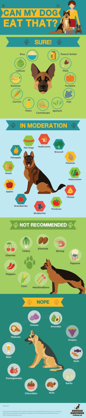 Safe Human Food For Your Dogs Info Graphic: CAN MY DOG  EAT THAT?  SURE!  Rice  Peanut Butter  Meat  Lettuce  Pumpkin  Bananas  Fish  Carrots  Pears  Cantaloupe Spinach  IN MODERATION  Mushrooms  Hot Dogs  Broccoli  Pineapple  Potatoes  Bread  Watermelon  Apples  Cheese  Strawberries  Tomatoes  Blueberries  NOT RECOMMENDED  Almonds  Celery  Shrimp  Cherries  Popcorn  Peppers  Corn  Marshmallows  NOPE  Onions  Avocado  Walnuts  Grapes  Beer  Gum  Pomegranate  Garlic  Nuts  Chocolate  Sources:  GERMAN  SHEPHERD  Training Lab  http://www.humanesociety.org/animals/resource/tips/foods.poisonous to pets.htm  http://www.cesarsway.com/dog care/dog nutistion/Dog-Approved-People-Food  http://canigivemydog.com/ Safe Human Food For Your Dogs Info Graphic