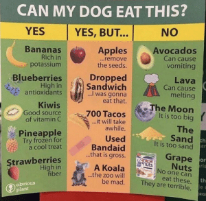 Found on r/memes: CAN MY DOG EAT THIS?  NO  YES  YES, BUT...  Avocados  Can cause  vomiting  Bananas  Rich in  Apples  ..remove  the seeds.  potassium  Dropped  Sandwich  I was gonna  eat that.  Blueberries  High in  antioxidants  Lava  Can cause  melting  822  Kiwis  The Moon  It is too big  700 Tacos  ...it will take  awhile.  Good source  of vitamin C  The  h  Sand  It is too sand  ar  Pineapple  Try frozen for  a cool treat  Used  Bandaid  ...that is gross.  Grape  or  Nuts  ris  No one can  th  eat these.  They are terrible.  Strawberries  High in  fiber  grape  nuts  A Koala  ...the zoo will  be mad.  obvious  plant  le  DRIG Found on r/memes
