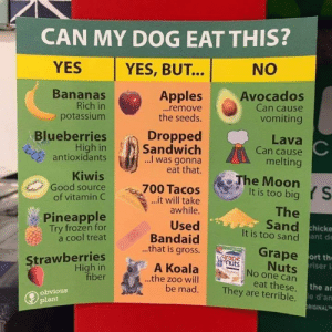 😂😂😂: CAN MY DOG EAT THIS?  YES  NO  YES, BUT...  Bananas  Rich in  potassium  Avocados  Can cause  Apples  ...remove  the seeds.  vomiting  Dropped  Sandwich  ..I was gonna  eat that.  Blueberries  High in  antioxidants  Lava  Can cause  melting  Kiwis  Good source  of vitamin C  The Moon  S  It is too big  700 Tacos  ...it will take  awhile.  The  Sand hicke  It is too sand ant de  Pineapple  Try frozen for  a cool treat  Used  Bandaid  ..that is gross.  Grape ort th  Nuts  riser l  No one can  Strawberries  High in  fiber  grape  nuts  A Koala  .the zoo will  be mad.  eat these. the ar  They are terrible. le d'an  obvious  plant  DRIGINALT 😂😂😂