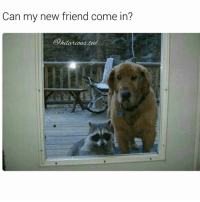 Memes, Ted, and 🤖: Can my new friend come in?  hitarioad ted Awe doggo Pupper racoon Ha ha. I'm weak flatlined dead pettypost nochill teamnoharmdone noharmdone rp @hilarious.ted