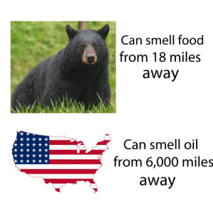 Dank, Food, and Memes: Can smell food  from 18 miles  away  Can smell oil  from 6,000 miles  away Know the difference by KingAliReshad MORE MEMES