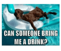 Can someone bring me a drink? #meme #funny #hilarious #dog: CAN SOMEONE BRING  ME A DRINK Can someone bring me a drink? #meme #funny #hilarious #dog