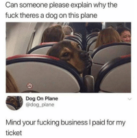 Snapchat: DankMemesGang: Can someone please explain why the  fuck theres a dog on this plane  Dog On Plane  @dog_plane  Mind your fucking business I paid for my  ticket Snapchat: DankMemesGang