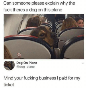 can-someone-please: Can someone please explain why the  fuck theres a dog on this plane  Dog On Plane  @dog_plane  Mind your fucking business I paid for my  ticket