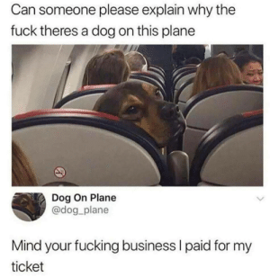 Mind yuh business I pays for mine.: Can someone please explain why the  fuck theres a dog on this plane  Dog On Plane  @dog plane  Mind your fucking business l paid for my  ticket Mind yuh business I pays for mine.