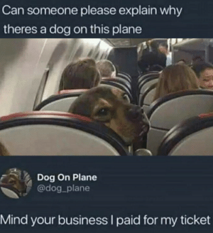 can-someone-please: Can someone please explain why  theres a dog on this plane  Dog On Plane  @dog plane  Mind your business I paid for my ticket
