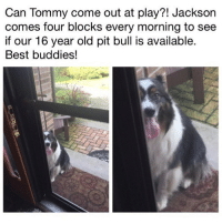 @drsmashlove is a must follow for all animal lovers!!: Can Tommy come out at play?! Jackson  comes four blocks every morning to see  if our 16 year old pit bull is available.  Best buddies! @drsmashlove is a must follow for all animal lovers!!