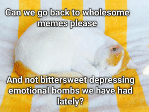 Since I cant submit a text post: Can we go back to wholesome  memes please  And not bittersweet depressing  emotional bombs we have had  lately? Since I cant submit a text post